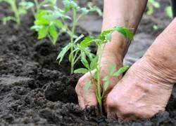 Известкование почвы в средней полосе