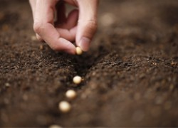 На какую глубину сажать семена при подзимнем посеве