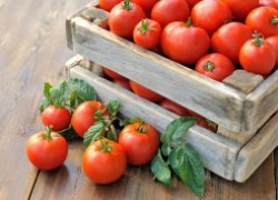 Запасаем семена помидоров для следующего года