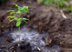 Восемь ценных правил посадки саженца в грунт