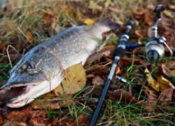 Щучья рыбалка в ноябре