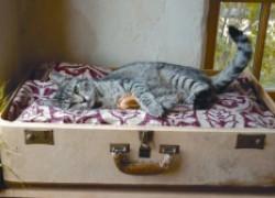 Симпатичный домик из старого чемодана для кошки матрешки