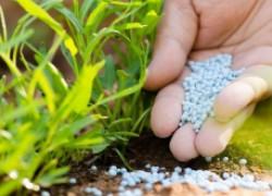 5 минеральных удобрений, которые помогут бороться с болезнями сада