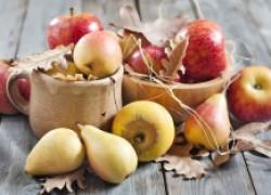 Правила хранения яблок и груш
