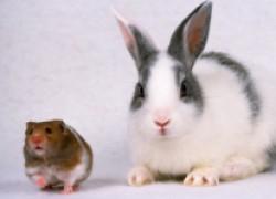 Защищаем сад от мышей и зайцев