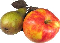 Проектируем «плодовый конвейер» на весь сезон