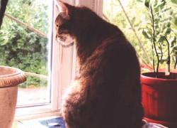 История о том, как кошка лиза подружилась с комнатными растениями