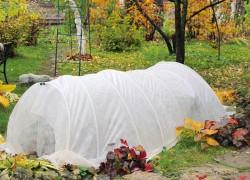 Мифы об укрытии растений на зиму