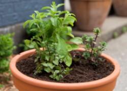 Делаем контейнерный сад для чайных растений