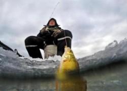 5 секретов самодельной прикормки для зимней рыбалки