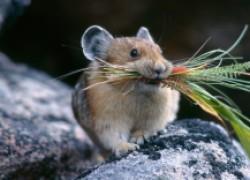 Гоним мышей с участка в три шеи