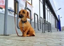 Собака на привязи у магазина