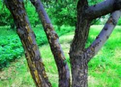 Безопасные препараты для защиты сада от болезней