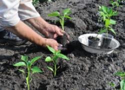 Готовим грунтосмеси и субстраты для выращивания рассады