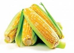 10 лучших сортов сахарной кукурузы