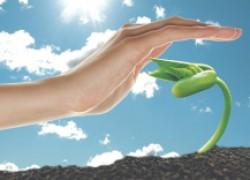 15 укрывных материалов, которые уберегут ваши растения от мороза