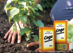 8 способов использования соды в саду