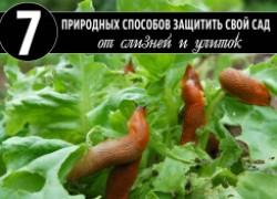 7 природных способов защитить свой сад от улиток и слизней