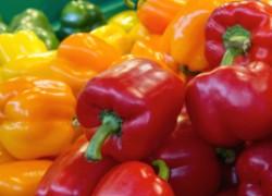 9 самых толстостенных сортов перцев