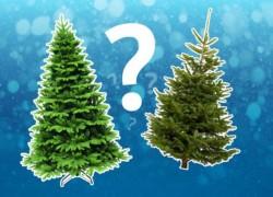 Новогодняя елочка: искусственная или настоящая?