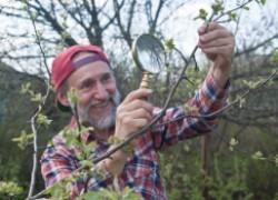 Миссия садовода зимой: обезвредить вредителей