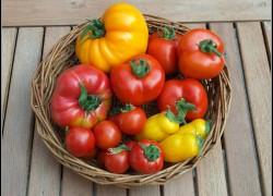 Благодаря вашему рецепту помидоры в прошлом году порадовали урожаем