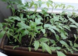 Когда сажать семена на рассаду (ликбез для огородных чайников)