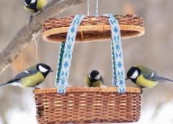 Помогаем птицам пережить зиму