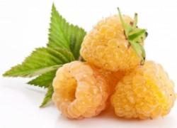 8 модных сортов желтой малины, которые вас не разочаруют