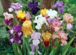 Цветы для «ленивых»