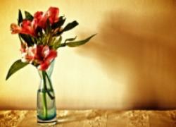 Как сохранить цветы свежими и красивыми