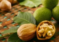 Почему не удаются прививки грецкого ореха