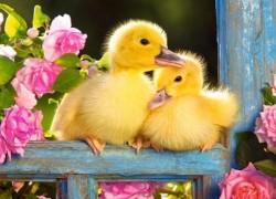 Режимы инкубации домашней птицы