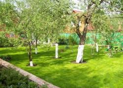 Зачем считают деревья