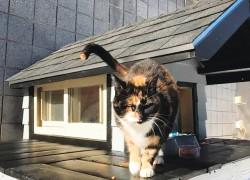 Полицейские бостона построили дом для кошки