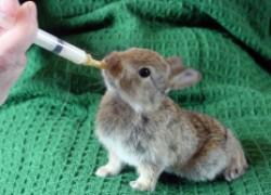 Вырастил крольчат без мамы-кормилицы и приумножил поголовье