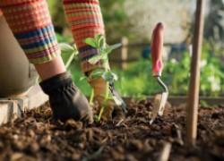 Как повысить плодородие почвы без навоза и помета? Новое эффективное решение!
