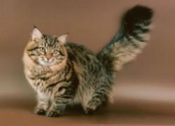 У кота камни в почках