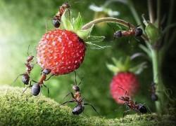 Достали муравьи?