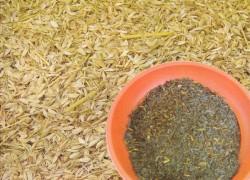 Зола от рисовой шелухи – оправдано ли применение?
