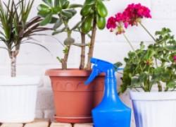 Объявляем комнатным растениям банный день