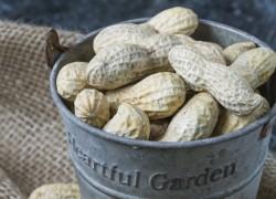 Можно ли вырастить в России арахис
