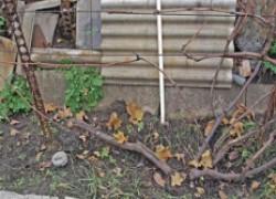 Виноград открыт – что дальше?
