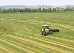 Начинающим фермерам станет легче взять в аренду землю