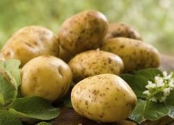 Где себя прекрасно чувствует парша картофеля?