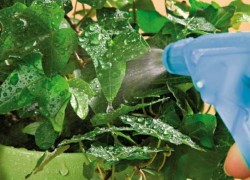 Как защитить сельскохозяйственные культуры от вредителей