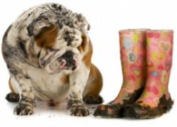 Приспособление для снятия грязной обуви