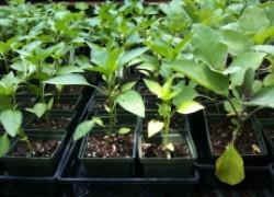 Чем подбодрить рассаду
