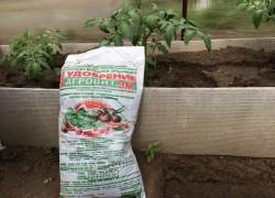 Нашла замену навозу - удобрение Агровит Эм - и моя рассада помидоров растет, как сумасшедшая
