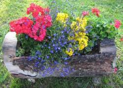 Оригинальные дачные цветники